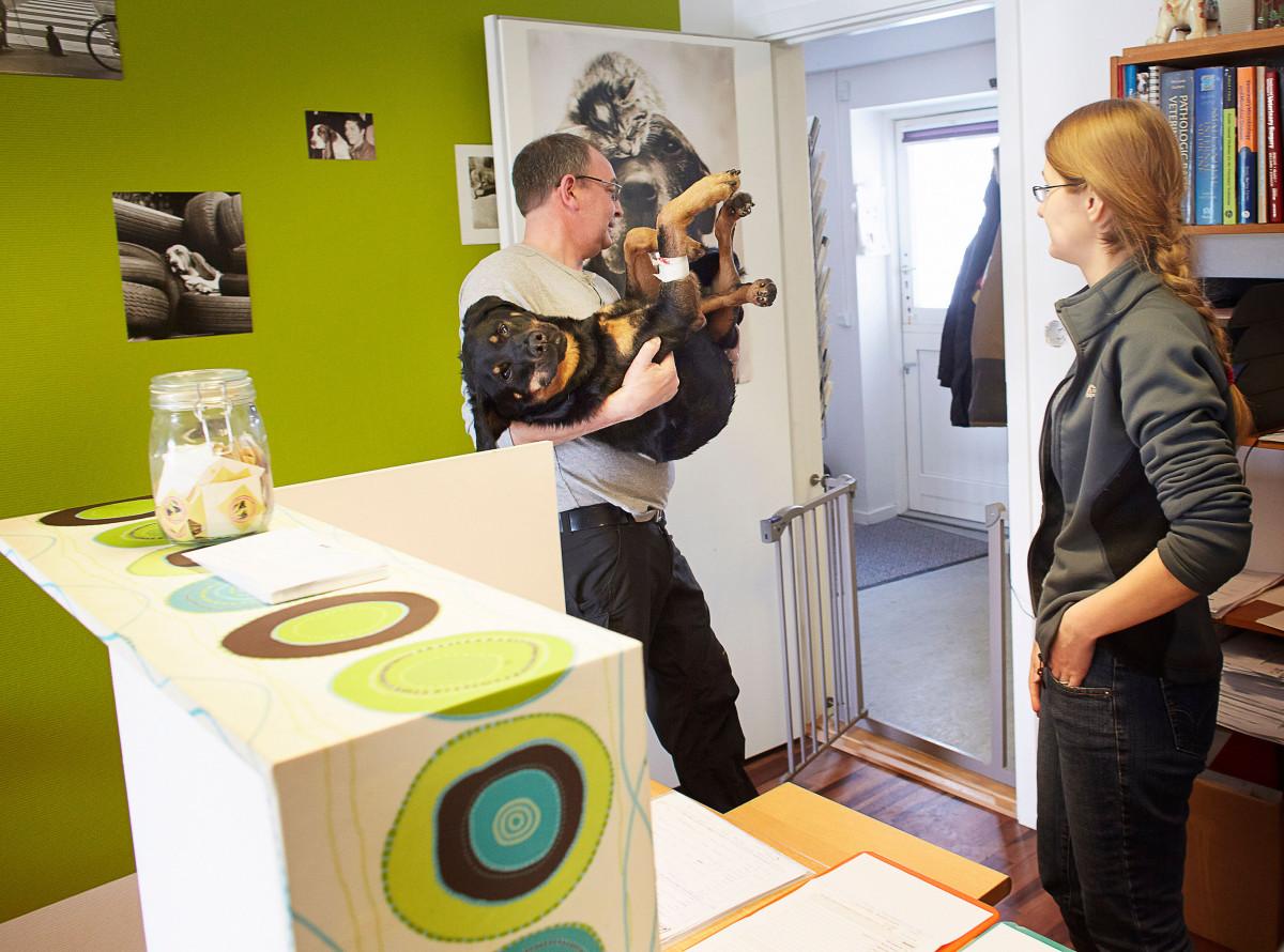 Dyrlæge Jens Eslau bære en ny sterileseret hund gennem venteværelset ind til opvågning efter operation.