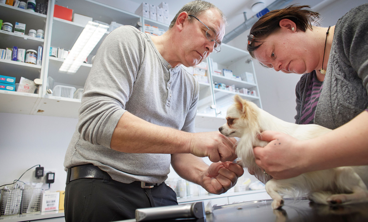 Dyrlæge Jens Eslau undersæger en lille hund med hjælp fra Monika Steensdatter (frivillig)