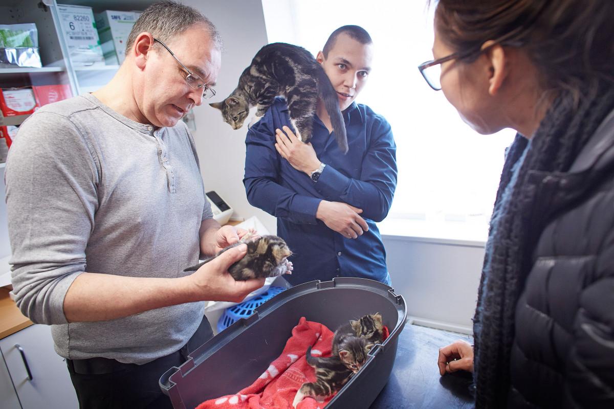 Dyrlæge Jens Eslau undersøger en Killing som er kommet akut ind på klinikken i dag .. da dens ejere er nervøs for den er syg, Killingen fejlede intet den var blot lidt mindre end de andre.