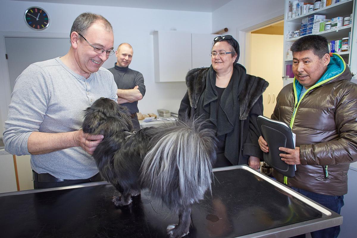 Dyrlæge Jens Eslau, undersøger hunden MIO, Birthe og Knud Lynge følger emd i undersægelsen, i baggrunden ses Dyrlæge Flemming Jan.