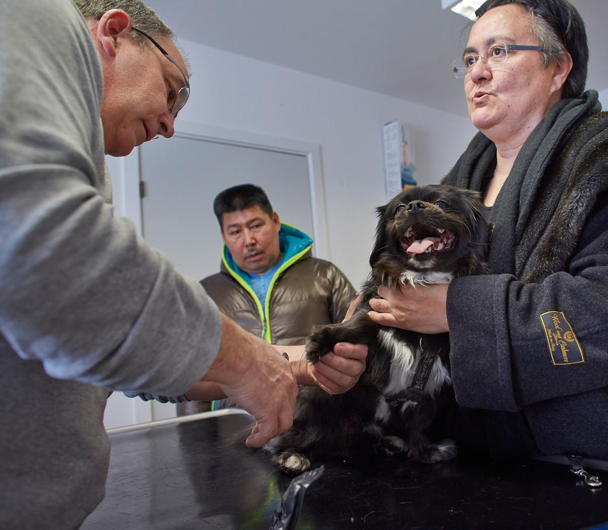 Dyrlæge Jens Eslau, undersøger hunden MIO, Birthe Lynge holder den og Knud Lynge kigger på