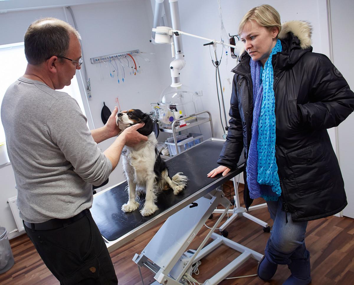 Dyrlæge Jens Eslau, undersøger hunden Chilli, Mens ejeren Sasha Ostermann kikker på