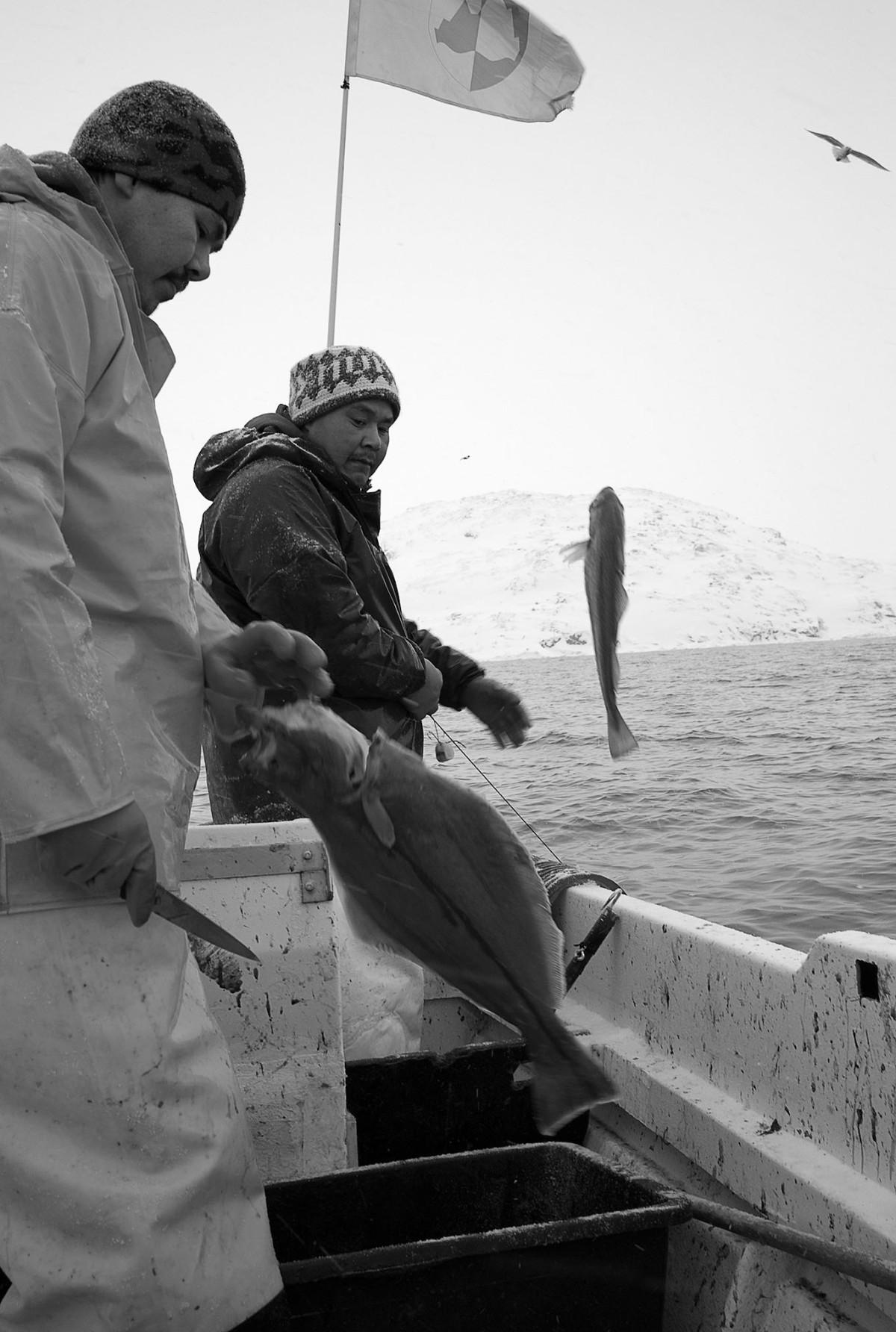 I minus 20 grader i marts månede skal langlinen op godt 800 meter hales i land, så fangsten kan bjerges, og Suulut og Isaq kan få nogle penge på kontoen. Suulut og Isak, hiver den 800 metere lange line i land, selv her